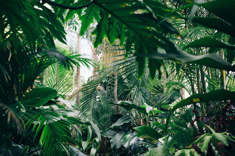 jungler